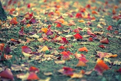 秋は抜け毛が多い