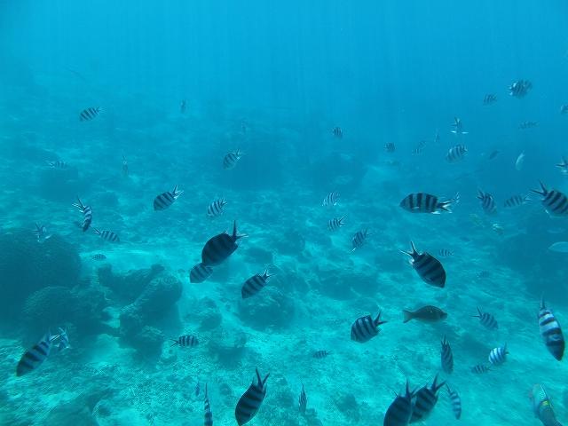 万座ビーチの潜水艦ツアー:熱帯魚たち