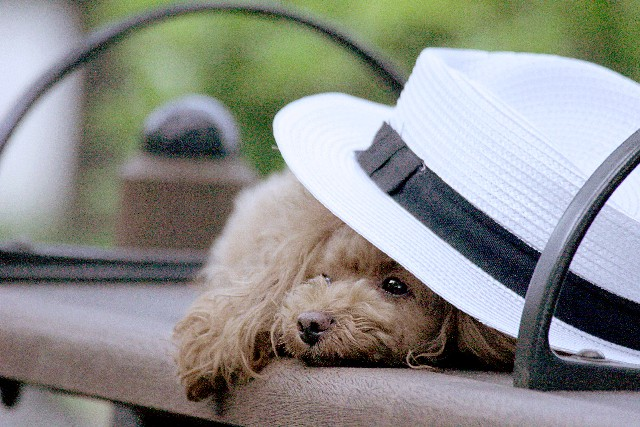 帽子で紫外線対策、ハゲ薄毛予防にも効果的