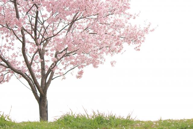 春・出会いの季節